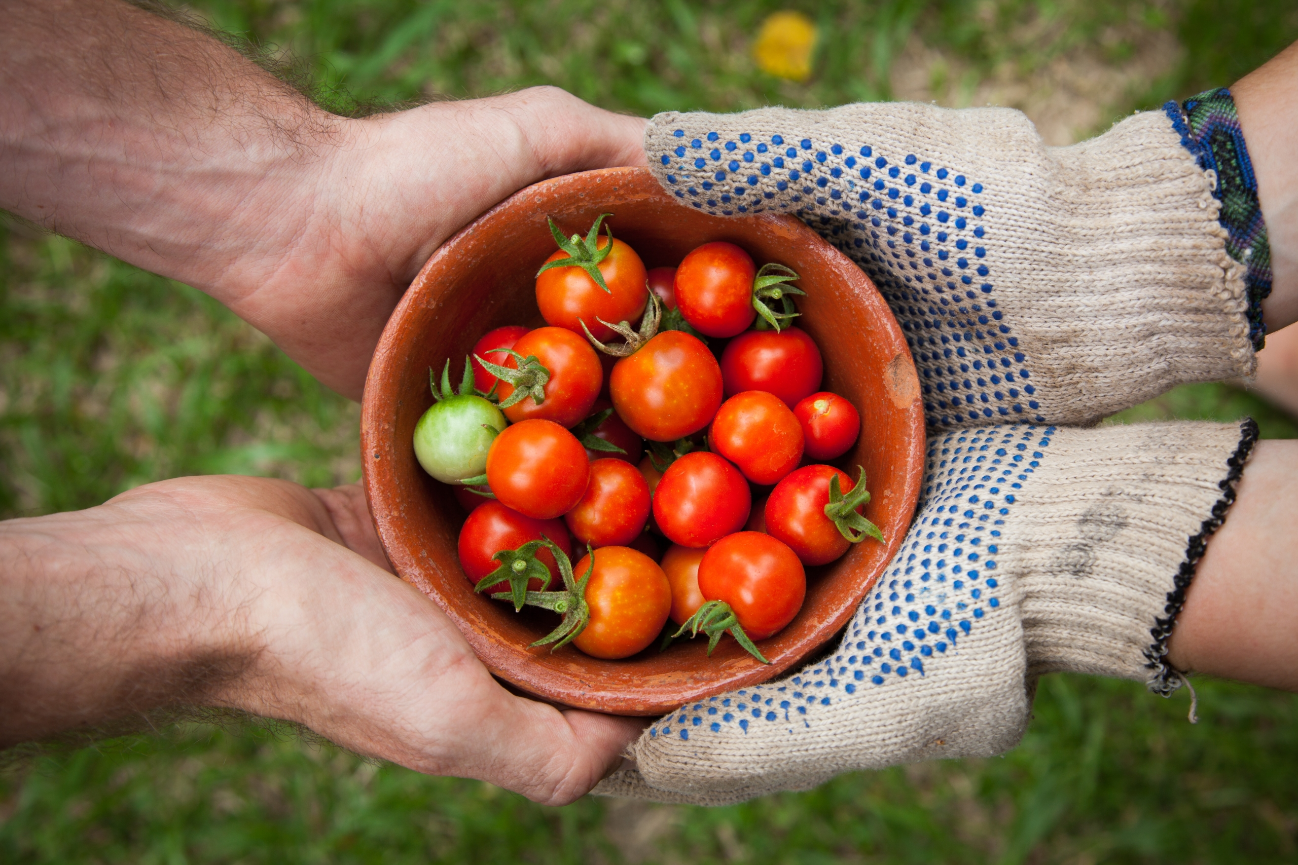 Two people holding a small bowl of tomatoes